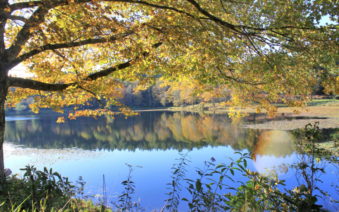 Fall photo October 1 2020