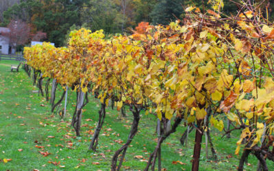 High Country Wine Trail